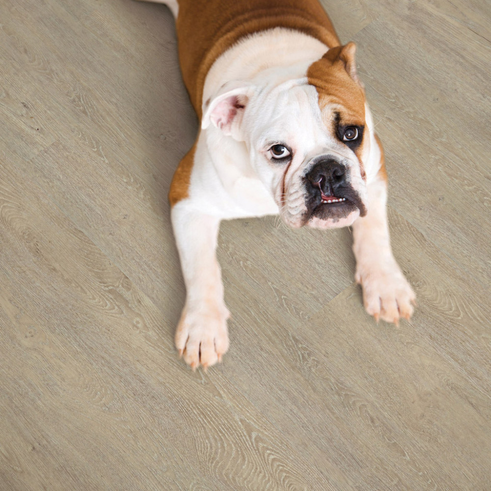 Bulldog lying outstretched on wood floor.